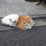 【画像】寒い日に「ネコ」を事故から守る儀式やっていますか?