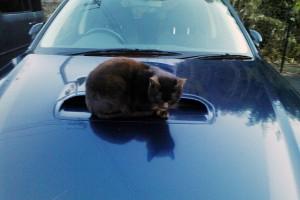 寒い日に「ネコ」を事故から守る儀式やっていますか?