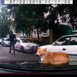 【画像】クルマの上で起きた驚き「ネコ動画」3連発