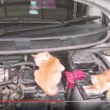 【画像】「猫バンバン(KNOCK KNOCK CATS)」って知っていますか?