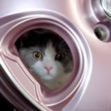 萌え萌えなホイール?  ニャンとも可愛い「MOSH CAT」の里親募集♪