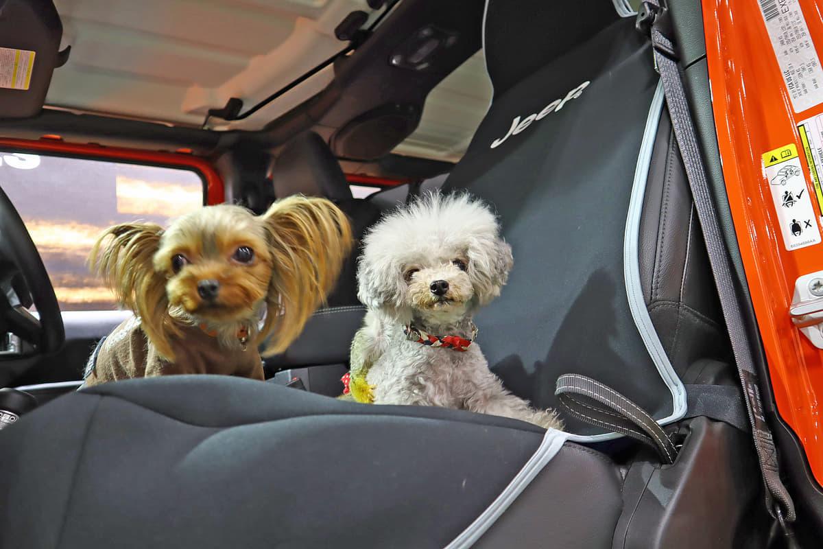 ケージからシートカバーまで「アウトドアで便利な愛犬用アイテム10選」