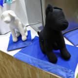【画像】ケージからシートカバーまで「アウトドアで便利な愛犬用アイテム10選」