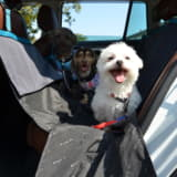 ヨダレやあくびは危険信号! 愛犬とのドライブを快適に過ごすプロ直伝のマル秘テク